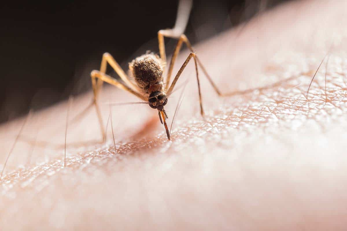 Why Do Mosquitoes Need Blood